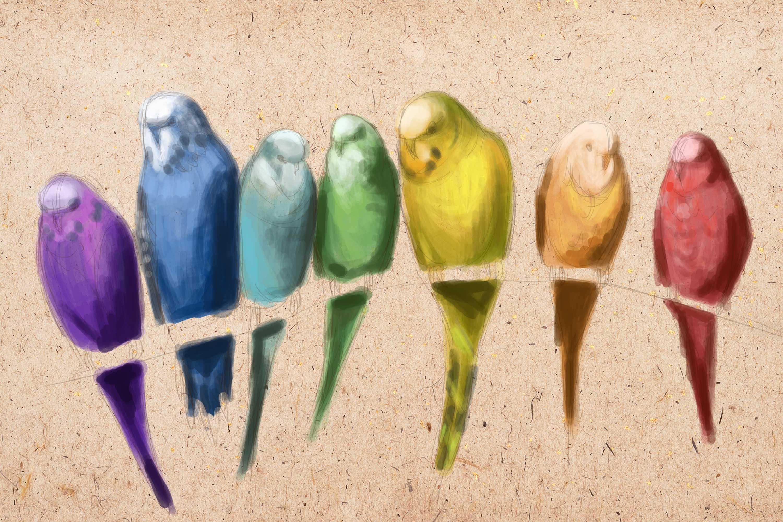 veľké Gay vtáky pics