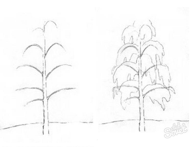 картинки осины карандашом поэтапно получается высокого качества